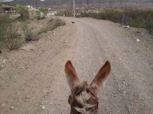 Donkey Cam