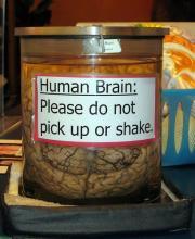 human brain don't shake