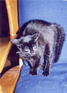 KittenGink