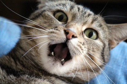 cat-1370024_960_720