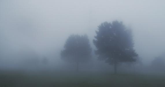 baume-nebel-landschaft-traurig